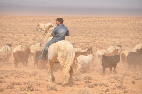 Young boy herder (1)